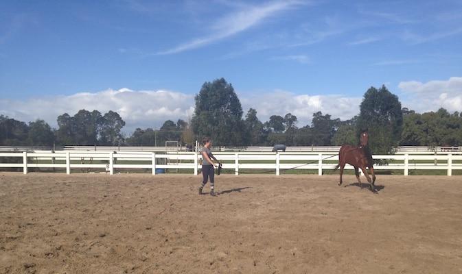 McLaren Vale Equine Veterinary Services, equine vet starting, McLaren Vale region, Adelaide